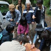 埼玉の山の木を見に行こう!画像