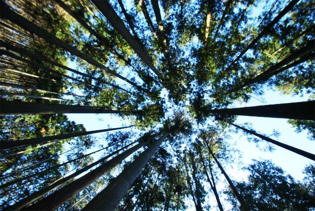 「Sun & Tree…集う家」~大黒柱の伐採へ~