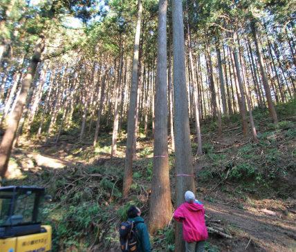 Sun & Tree…集う家