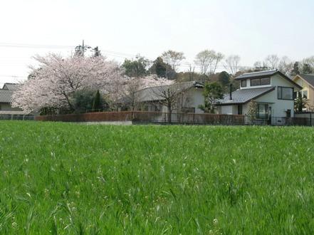 2008-04-05-6