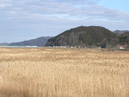 2010-01-30-1