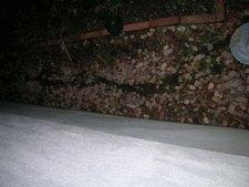 2011-03-17-5